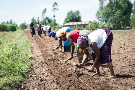 Anne Malemba of One Acre Fund prepares her land with other farmers