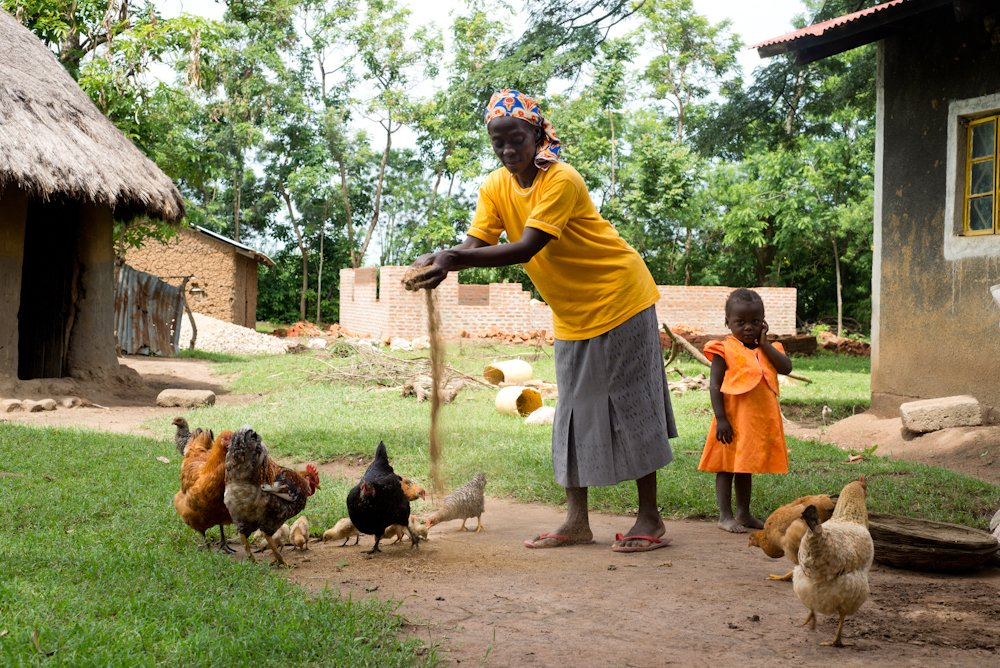 Beatrice Sangula feeds her chickens