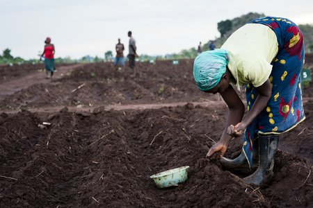 Planting at crop research station in Malawi