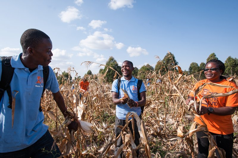 HQ Staff harvest maize in Tanzania