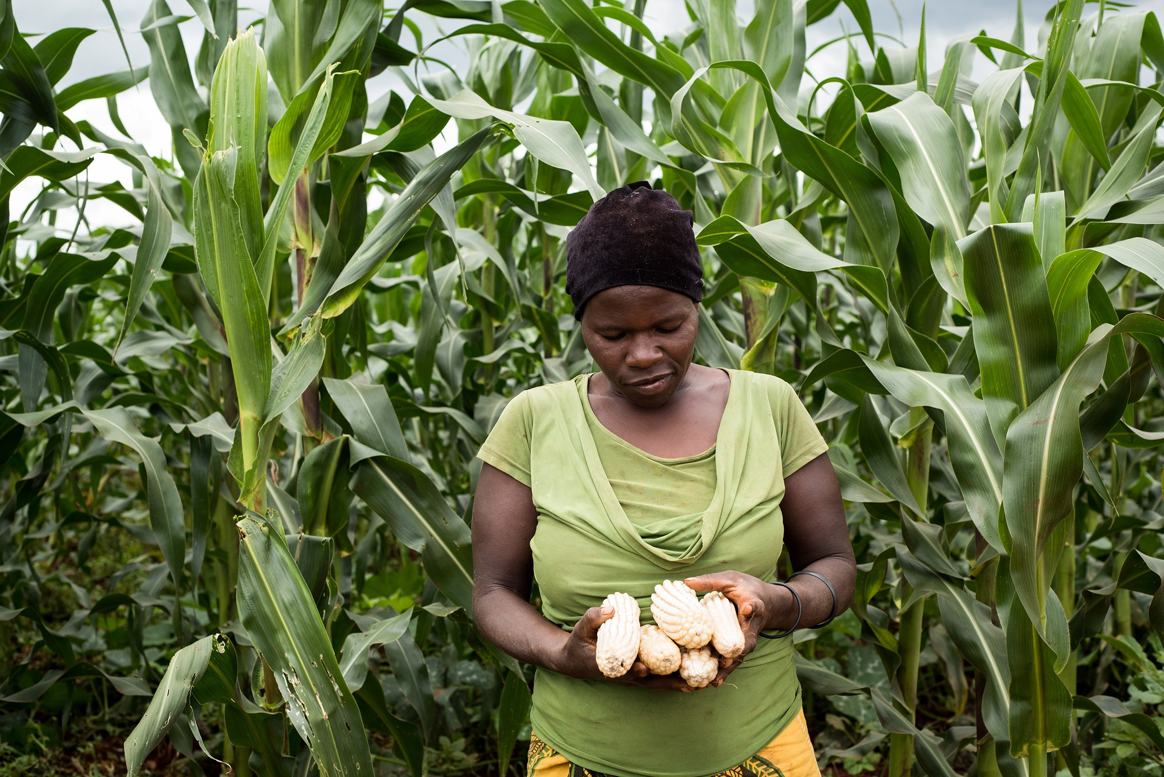 Solutions To Challenges Facing Agriculture In Kenya Cropnuts