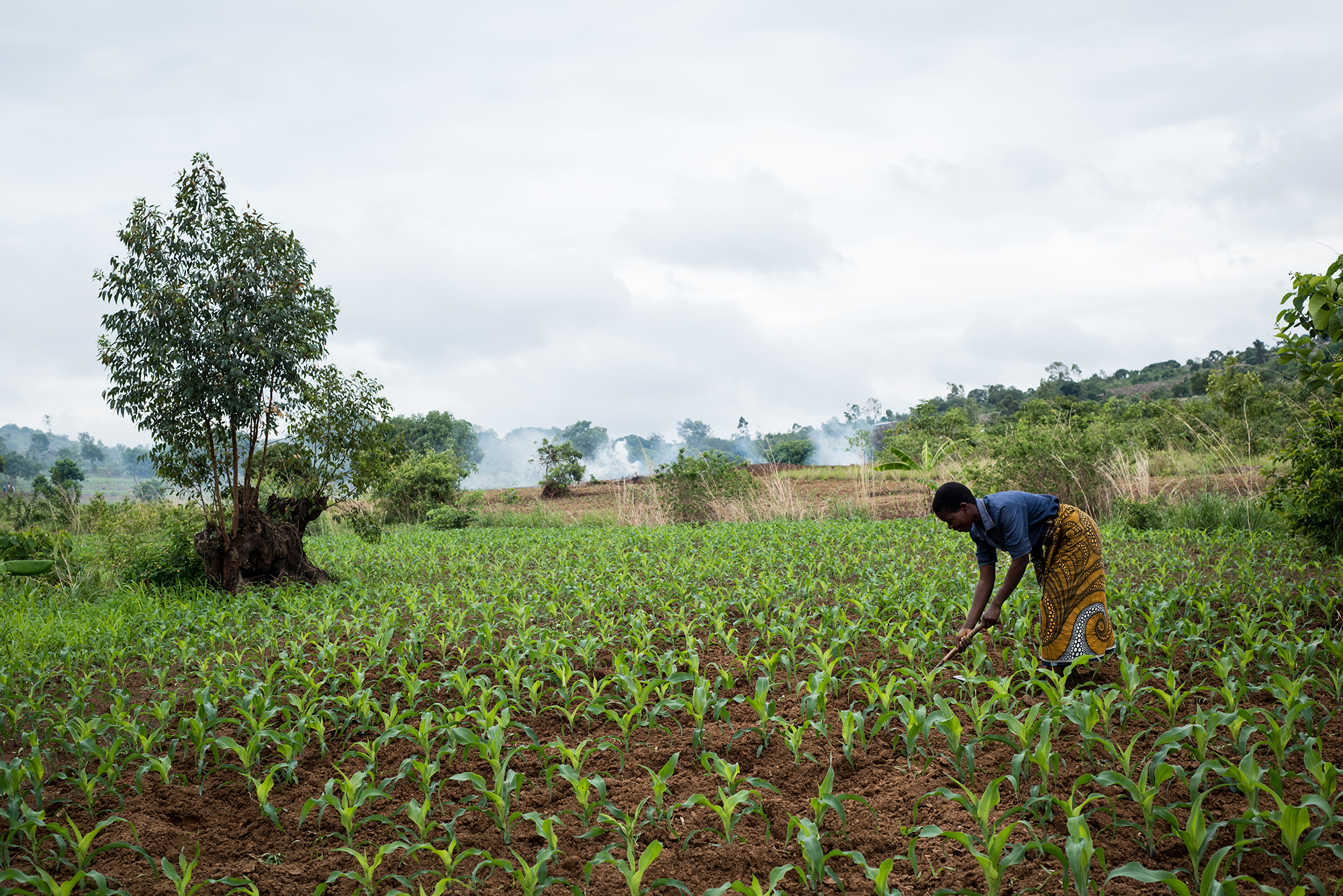 A farmer plants seed in Malawi